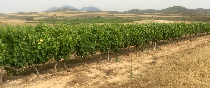 Wijnvelden (Rioja) bij Logroño