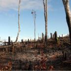Planeet wacht 'verschrikkelijke toekomst' als de mens niet sneller in actie komt